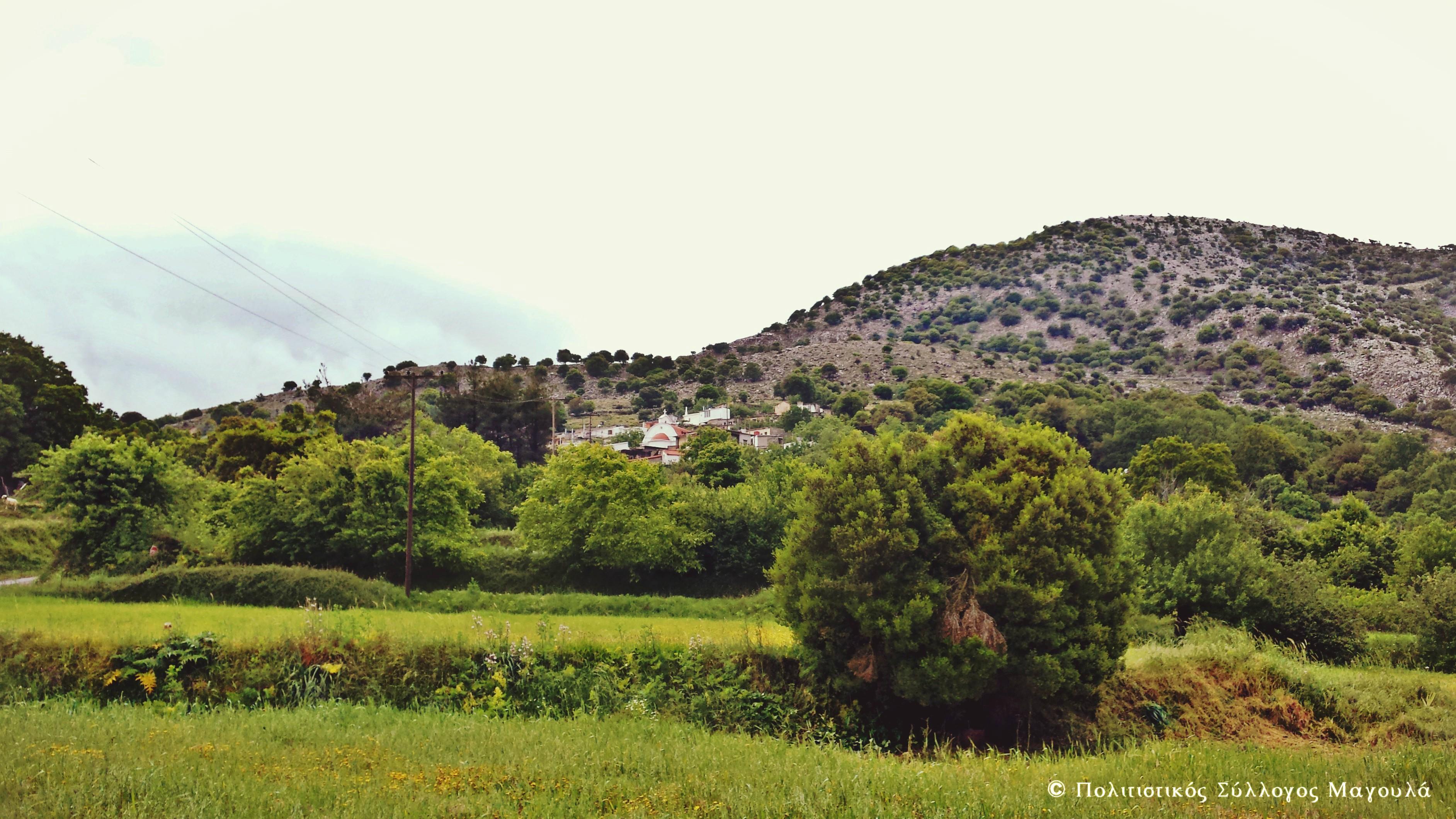 Ο Μαγουλάς από τον κάμπο- Magoulas from the plain
