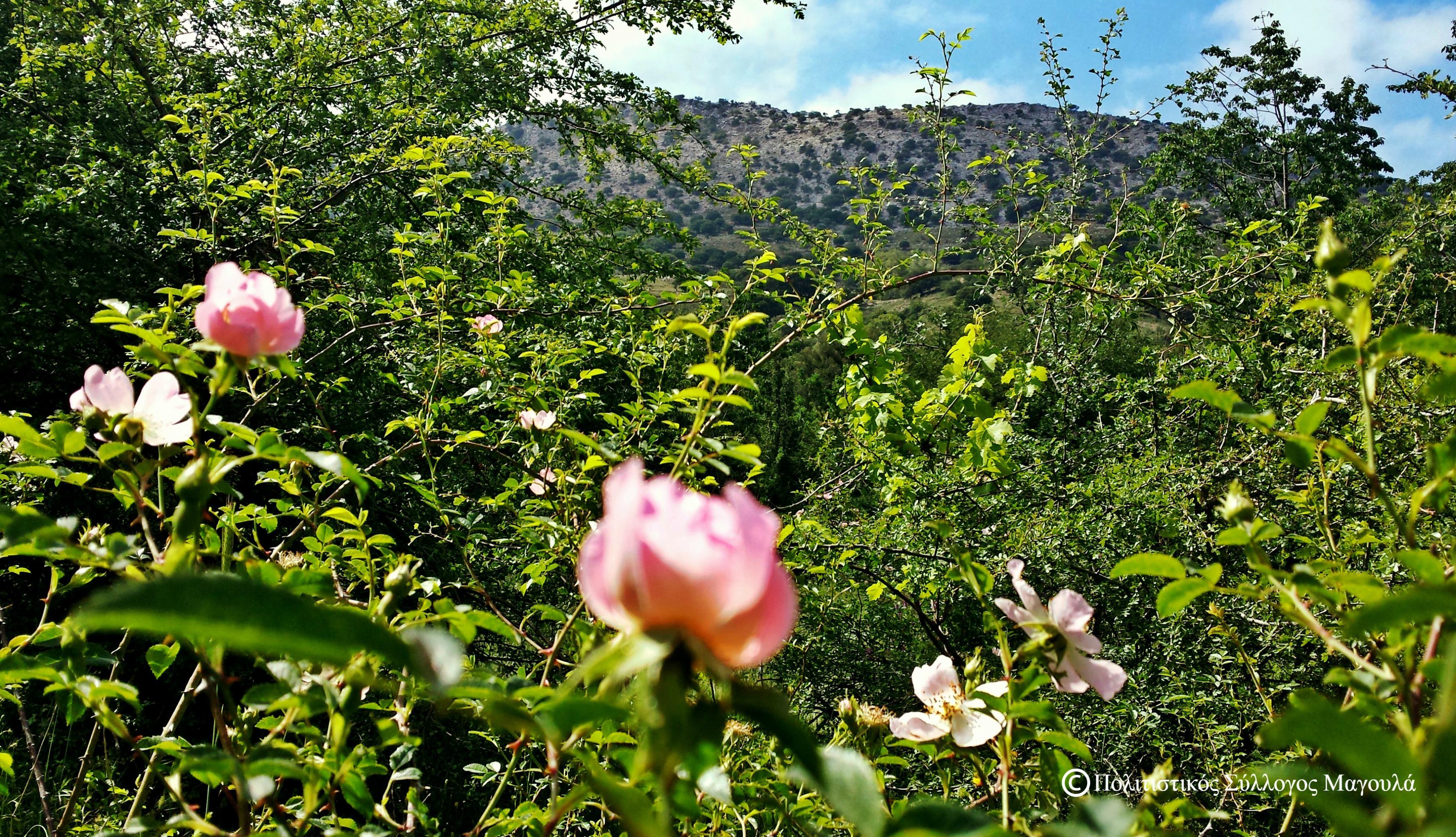 Άνοιξη στον Κλώρο- Spring in Kloros