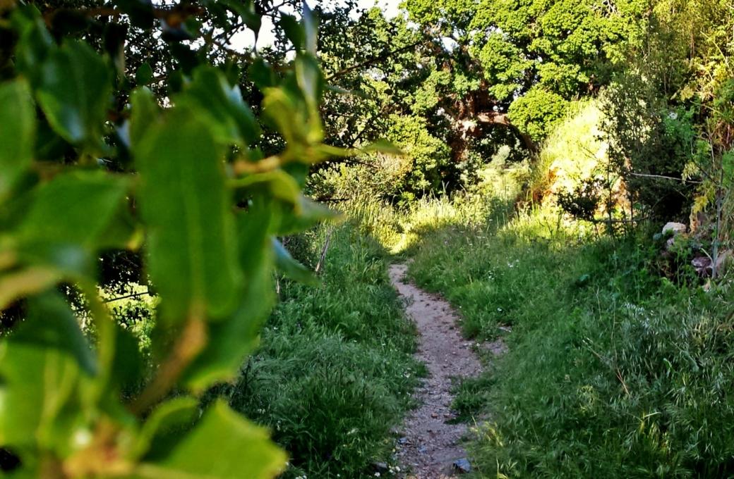 Μονοπάτι του άλσους προς τον κάμπο- Path of watermill's wood to lasithi plain