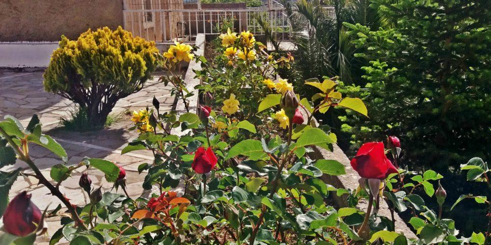 Λουλούδια Αγίου Σπυρίδωνα- St Spiridon's flowers