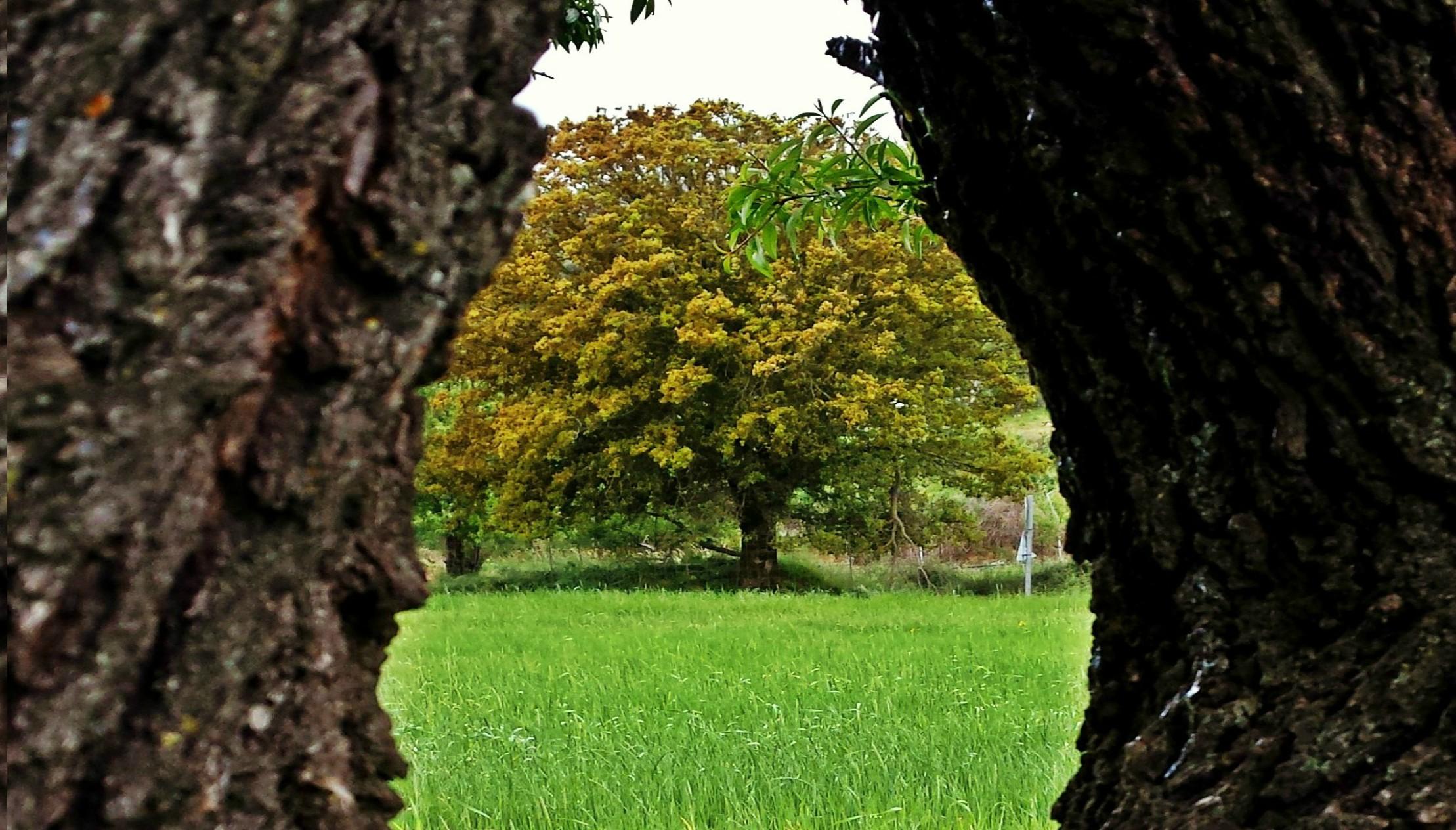 Φύση του χωριού Μαγουλά- Magoula's nature