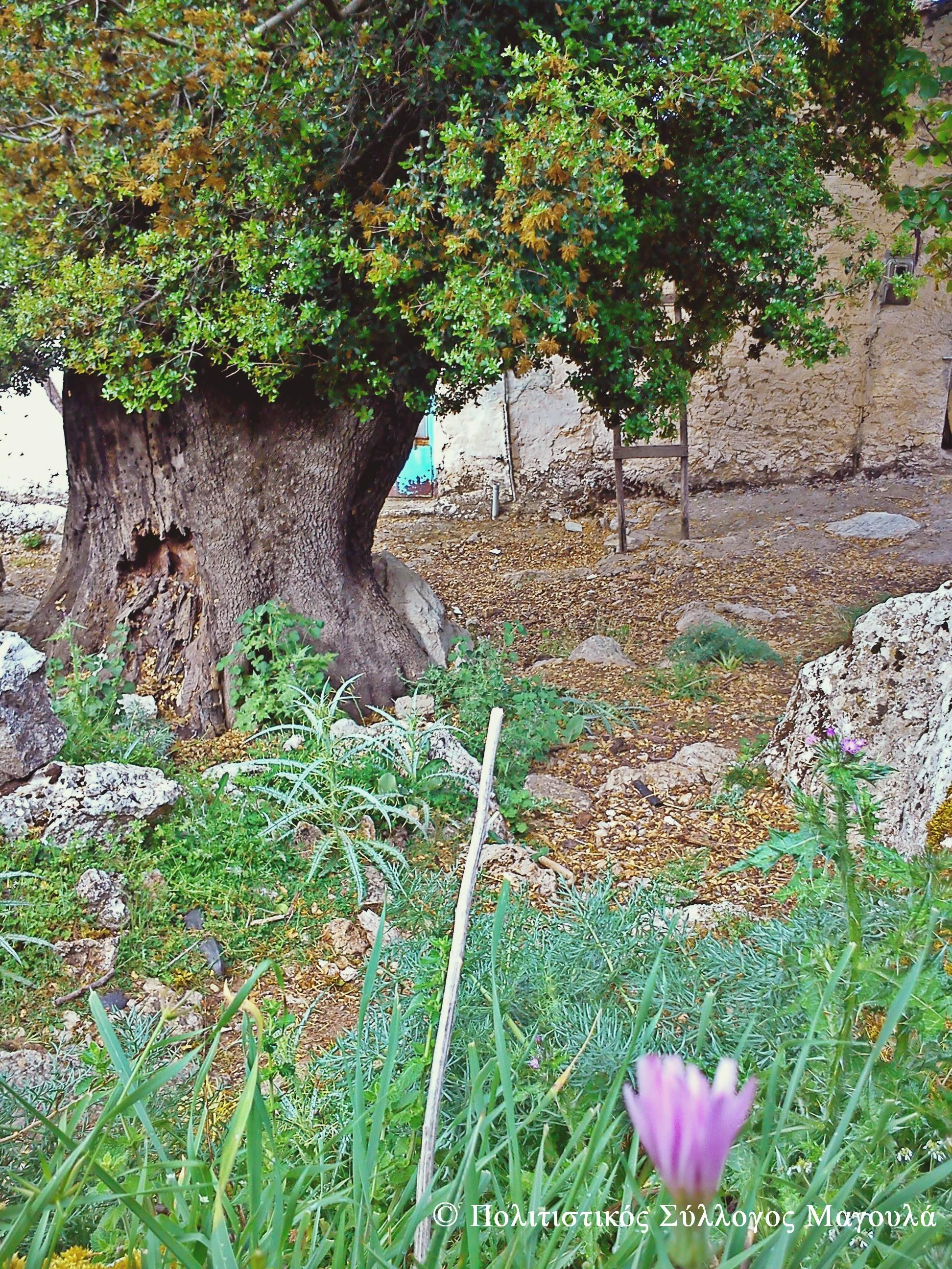 Μέσα στο χωριό- Inside the village