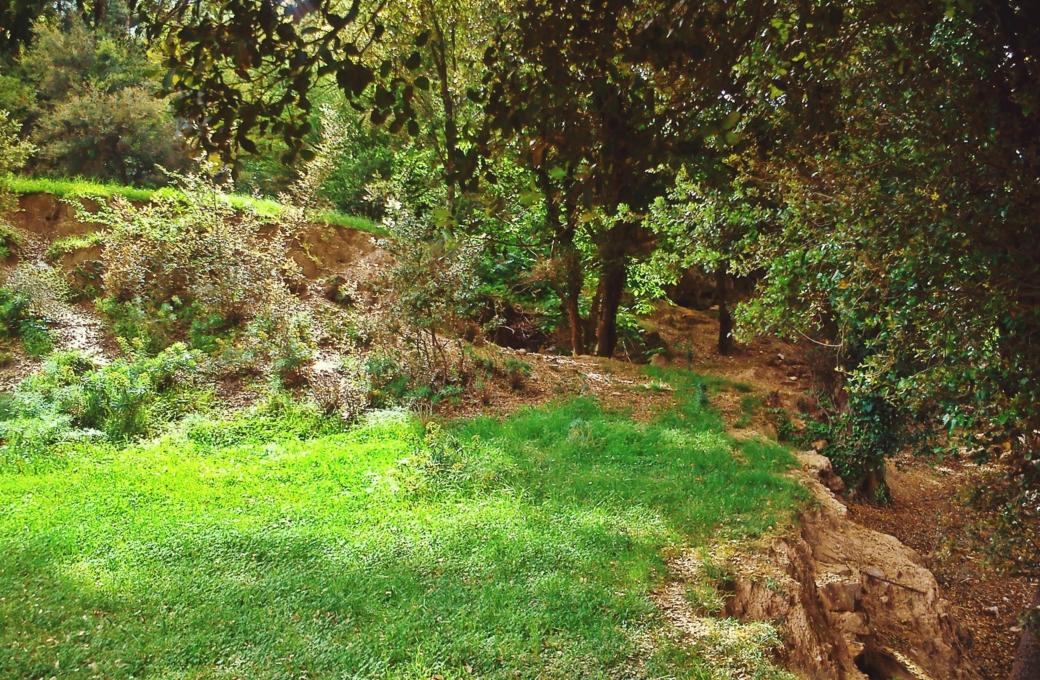 Άλσος του δεύτερου νερόμυλου- Wood of the second watermill