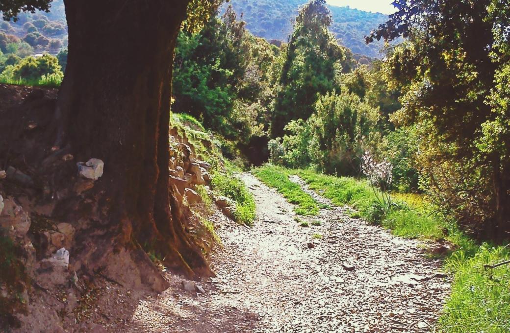 Μονοπάτι του άλσους- Path of watermill's wood