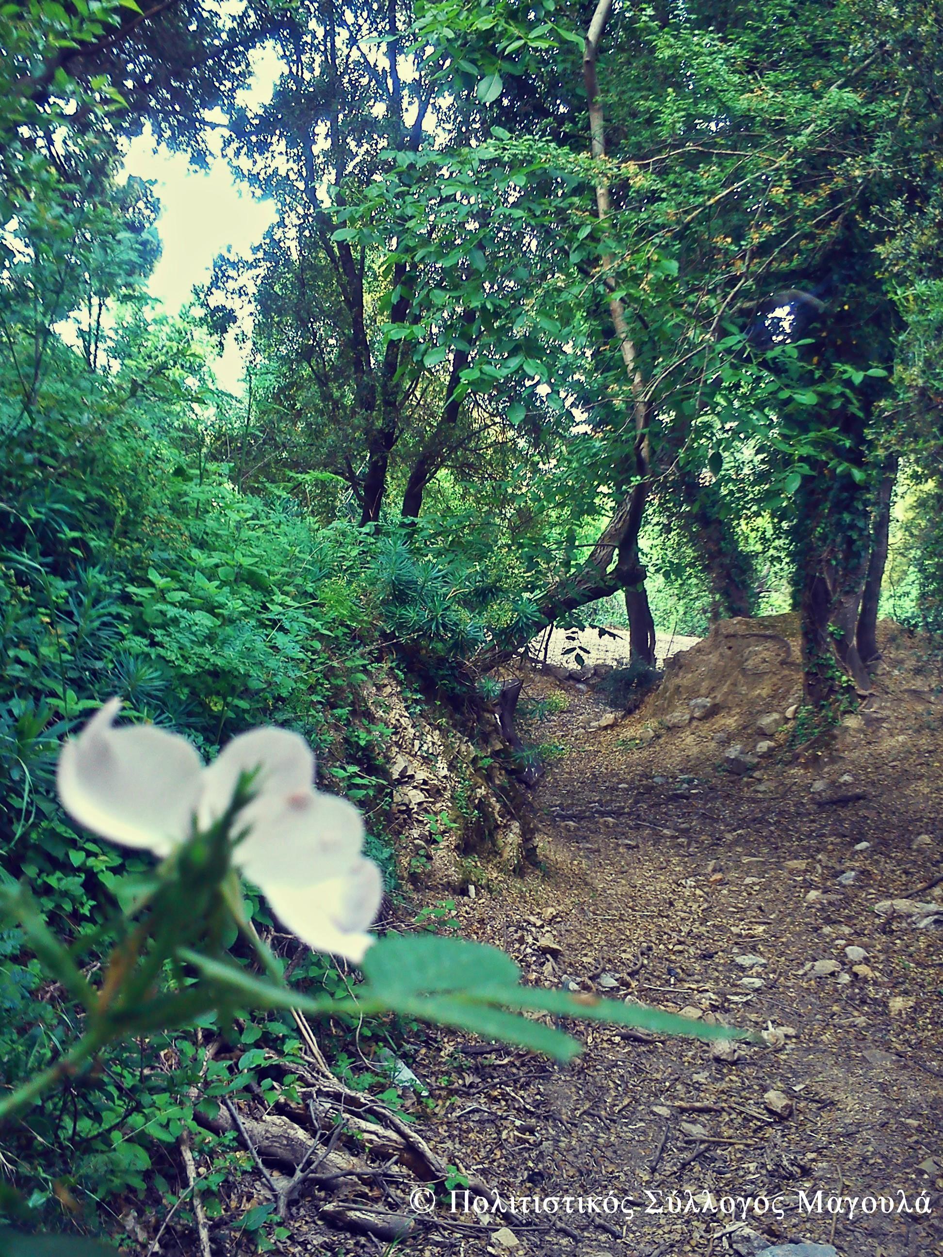 Δρόμος προς το άλσος του δεύτερου νερόμυλου- Path to the second watermill's woods