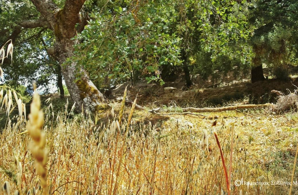 Δυτικά του χωριού Μαγουλά η περιοχή Ριμάμπελα- West of Magoula is the area Rimabela