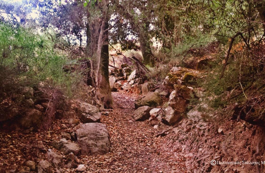 Δρόμος από τα Ριμάμπελα προς το χωριό- Path from Rimabela to the village